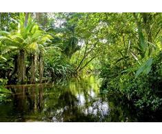 Scenolia Papier Peint Intissé Forêt et Rivière dans la Jungle Tropicale 4 x 2,70m - Décoration Murale Effet Trompe l'Oeil - Revêtement Panoramique Tapisserie XXL - Pose Facile et Qualité HD