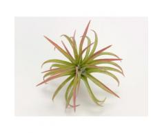 Plante artificielle tillandsia vert H.17cm NATURE
