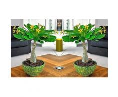 Le palmier hawaïen : 2