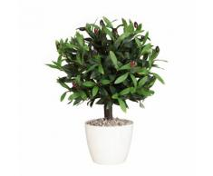 Arbuste d'olivier hauteur 300 mm