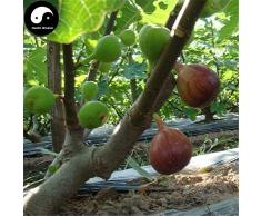 Shopmeeko Acheter Ficus Carica Arbre Fruitier Semente 240pcs Figues De Fruits Pour Fruits Ficus Carica