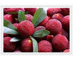10 pcs / Pack, graines de arbousiers Myrica graines rubra rouges graines de bayberry arbousiers vivaces goût arbre fruitier doux