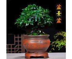 GETSO Yixing Pourpre d Pot de Fleurs Boutique Orchidée Fleur Pot dintérieur en céramique Yixing Usine de Bureau Bonsai: Chine, 06