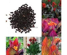 Portal Cool Graines Radis - Gloriette - hybride, facile à cultiver - Globe en forme - 100 graines