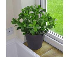 43 cm géranium Aralia Bush Plante artificielle Arbre Arbuste avec pot Noir par feuille
