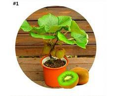 Sisaki 50pcs / sac mélangé Mini arbre fruitier à la maison plante ornementale d'intérieur Graines