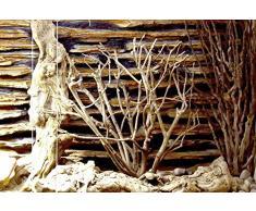 Lucky Reptile DSB-1 Décoration pour terrarium Arbuste de la savane
