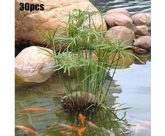 quanju cheer 30 Pcs Eau Bambou Graines Cyperus Alternifolius Graines Semi-Aquatique Plante Aquatique Étang Jardin Décor Graines de Cyperus Alternifolius
