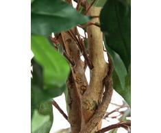Arbuste artificiel, Ficus benjamina, 1260 feuilles, troncs naturels, 180 cm - ficus artificiel / plante d'intérieur artificielle - artplants