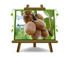Actinidia - Kiwi Jenny - Arbre fruitier autofertile 170 cm sur pot de 20 - 2 ans
