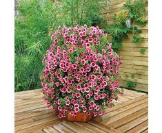 Potager ou jardin vertical en bois garanti 3 ans made in france (Bois naturel) - plus pratique qu'un carré potager!!