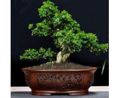 HONIC Rétro Pourpre Sable Bonsai Pot de Fleurs Grand intérieur BalconySimple Jardin Céramique Bosai Pot Emboss Yixing Bosai: 01, Grand