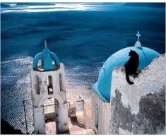 Affiche 24x30 cm Chat en Grèce / Cat in Greece / Katze in Griechenland Hans SILVESTER