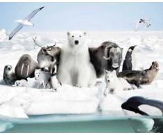 Empire Merchandising Mini poster Animaux des régions polaires