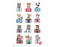 empireposter 738127 Chats – Appareil Photo – Animaux Chats Poster, Papier, Multicolore, 91,5 x 61 x 0,14 cm