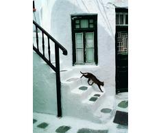 Affiche 50x70 cm Chat grec / Greek Cat / Griechische Katze Hans SILVESTER