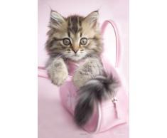 1art1® Empire Merchandising Poster photo de chaton par Rachel Hale fourni avec des accessoires