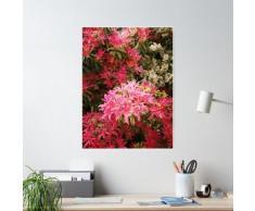 Pieris - Arbuste Forest Flame Poster