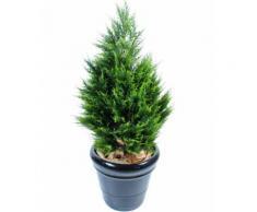 Plante artificielle haute gamme Spécial extérieur / Cyprès Junipérus Artificiel - Dim : 105 x 57 cm - Plantes artificielles