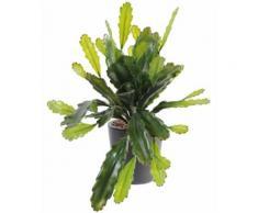 Plante artificielle haute gamme Spécial extérieur / Epiphyllum artificiel - Dim : 50 x 25 cm -PEGANE- - Plantes artificielles