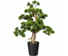 Bonsaï de pin dans un pot en plastique 135 x 150 mm