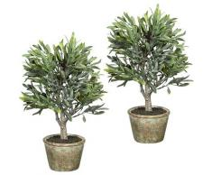 Arbuste d'olivier lot de 2, avec 7 olives