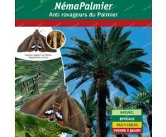 Nématodes papillon du palmier Paysandisia archon - 50 millions50 millionsBiotop