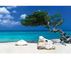 1art1 Plages Poster - Arbre Divi Divi, Tom Makie (91 x 61 cm)