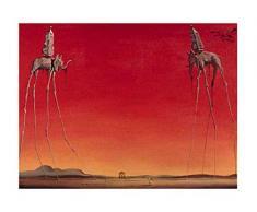 Editions Braun W08182 Affiche Papier, Rouge, 60 x 80 x 0,05 cm