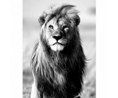 Affiche lion en noir et blanc 60x80cm Blanc, Noir