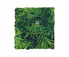 Plantes Artificielles: Casuarina