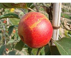 Jean Huchet Plantes - Arbre fruitier Pommier Amour 18175