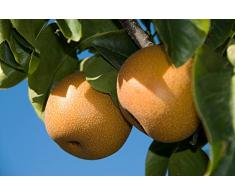 Jean Huchet Plantes - Arbre fruitier Kit Verger Original 3 Arbres