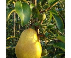 Jean Huchet Plantes - Arbre fruitier Kit Fruitier Pommes et Poires 5 Arbres