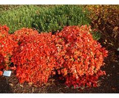 Jean Huchet Plantes - Arbre fruitier Kit balcon jardin de pot 17090