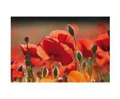 Coquelicots Papier Peint Photo/Poster Autocollant - Coquelicots Rouges, Fleurs Et Boutons (120x180 cm) - Décoration murale